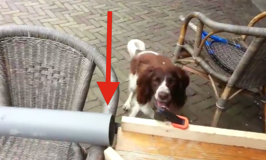how to get your dog to play fetch