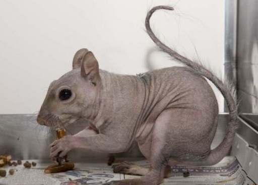 These 13 Animals Without Fur Look Totally Different. The Raccoon Blew My Mind! « Paw My Gosh