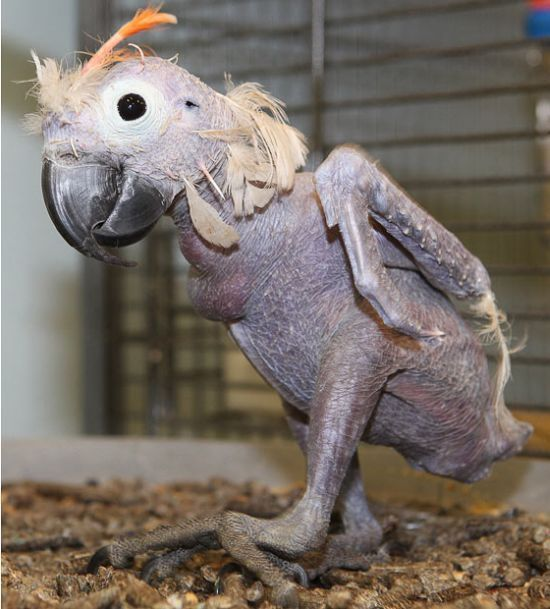 These 13 Animals Without Fur Look Totally Different The