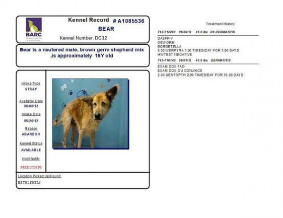 This was Bear's kennel record; just an older dog in need of some help.
