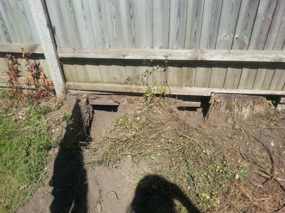 He saw two holes that were dug under his fence.