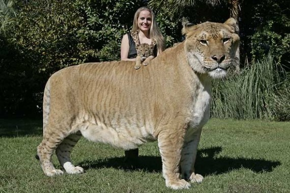 Here Are 10 Hybrid Animals That Actually Exist. #2 Is ...