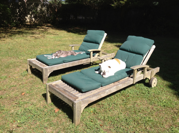 They started doing everything together, even sunbathing! Lou had never laid out on a lounge chair before.