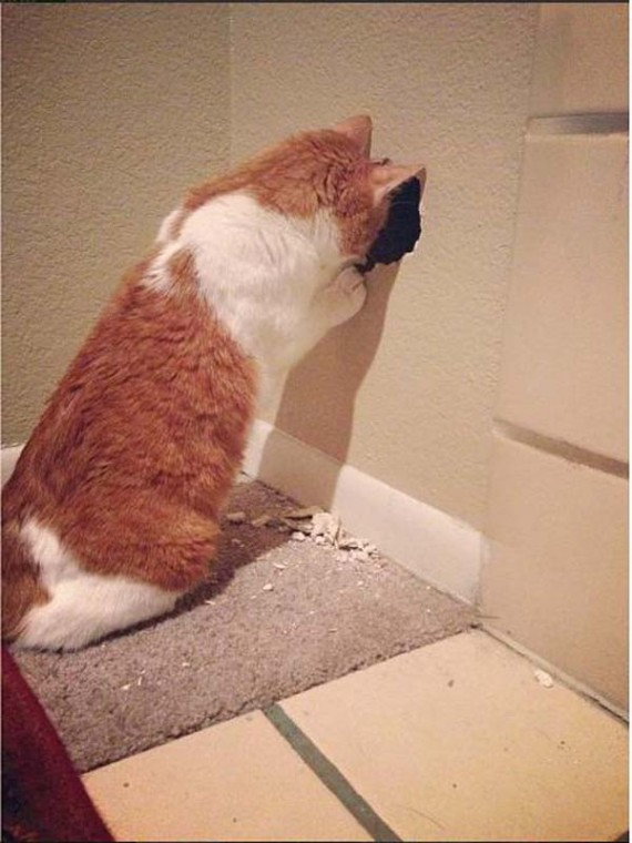 Phoebe the house cat took the first look inside the wall.