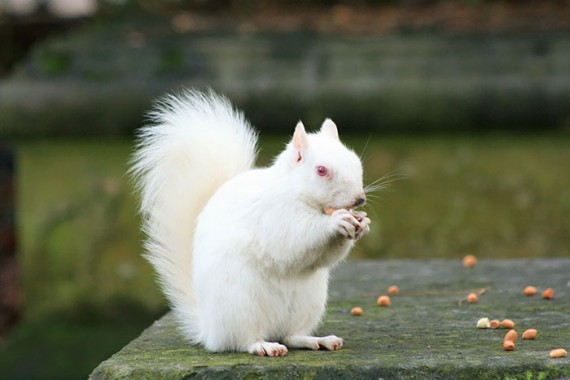 15) Albino Squirrel