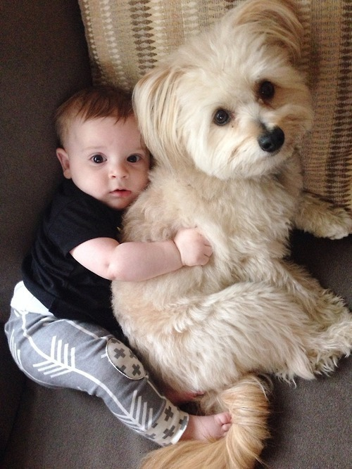 These 14 Dogs Can T Help But Wonder What Babies Are 171 Paw