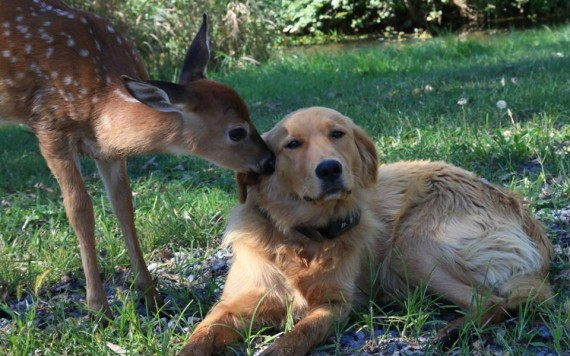 13 Rescue Fawns That Think And Act Like They Are Puppies