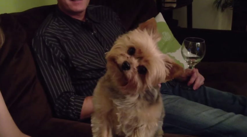 Curious Dog Tilts Head In Response To Questions 171 Paw My Gosh