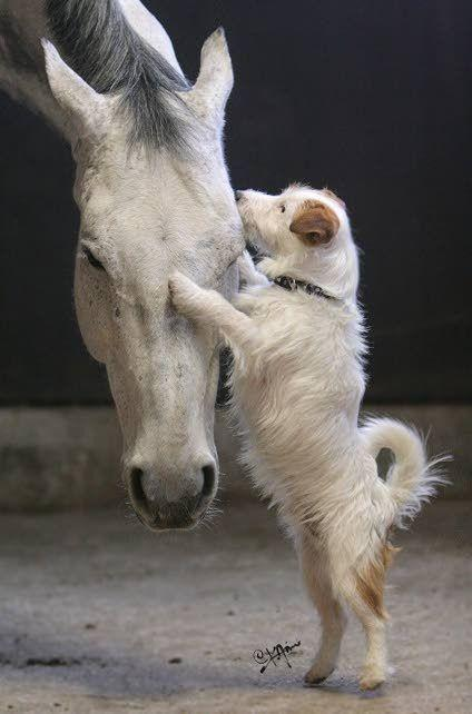 Proof That Horses And Dogs Are Wonderful Together « Paw My