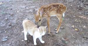 deer kitten