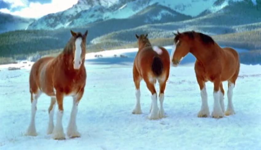 Budweiser Clydesdale Horses Wallpaper