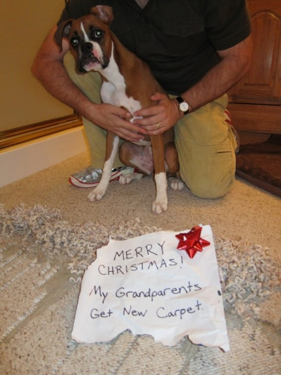 These 12 Dogs Just Ruined Christmas In The Most Hilarious