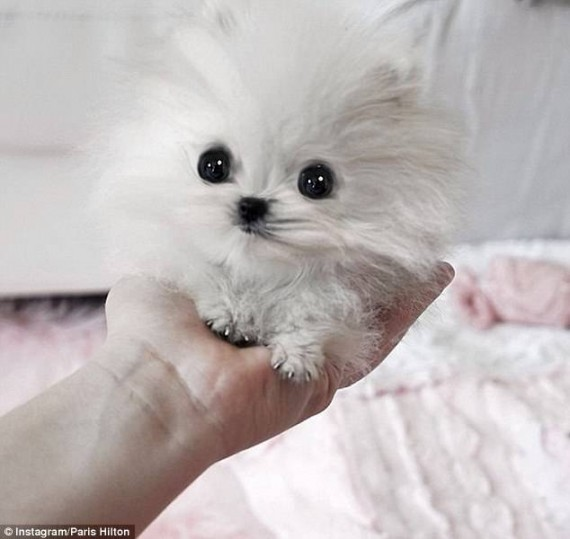 1) This is a dog?? Oh my!