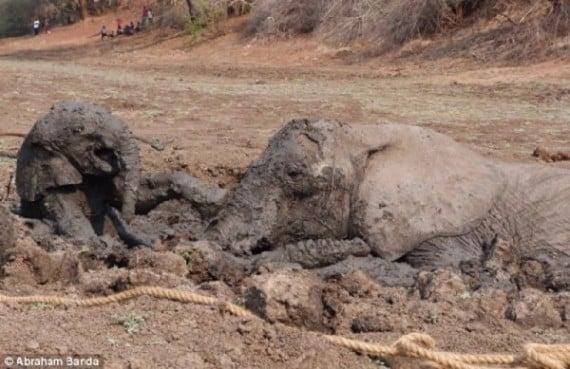 Il bambino si mise a piangere di nuovo. Lei non avrebbe lasciato il fango senza di lei madre.
