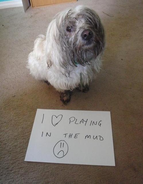1) Somehow they ALWAYS find the mud.
