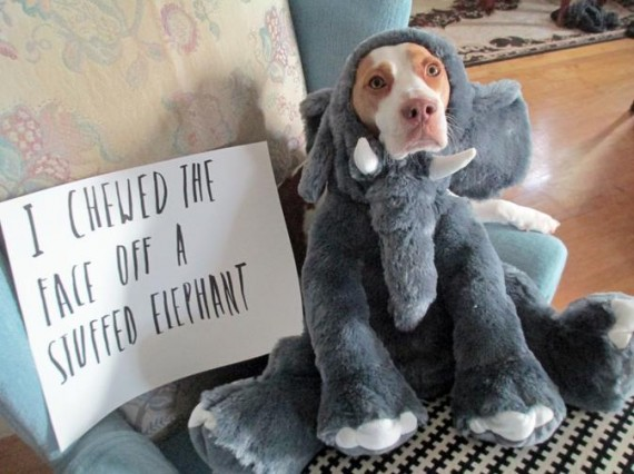 """18) """"It's not a good toy unless I can destroy it."""""""