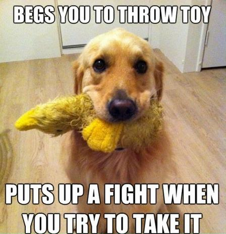 "5) ""Fetch or tug-of-war, fetch or tug-of-war...?"""