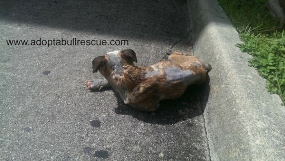 This dog had a horrible skin condition that could have been treated, but her owner neglected her and tossed her out like trash.
