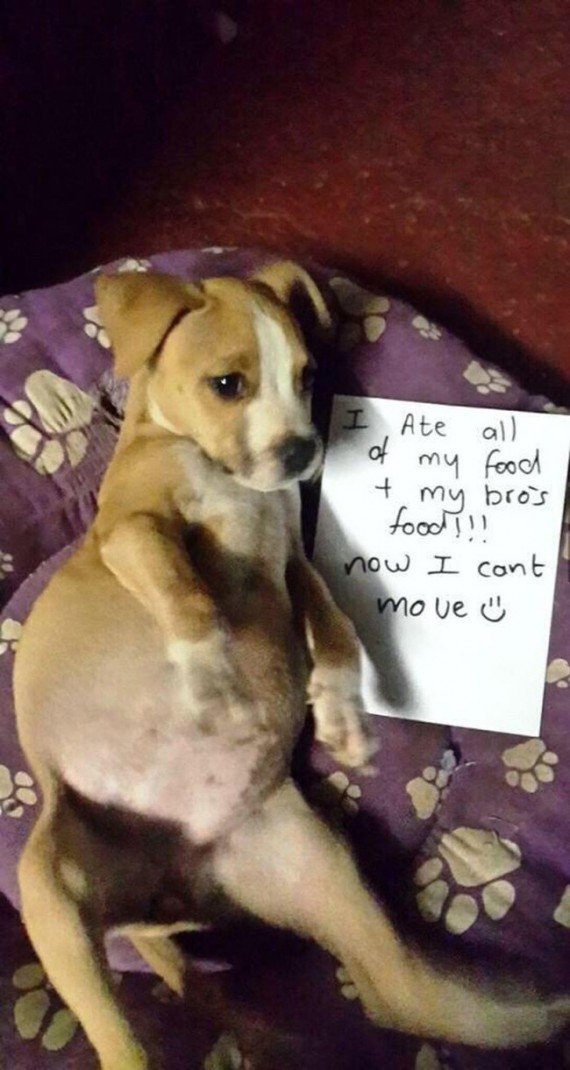 Will Dogs Still Eat With Bloat