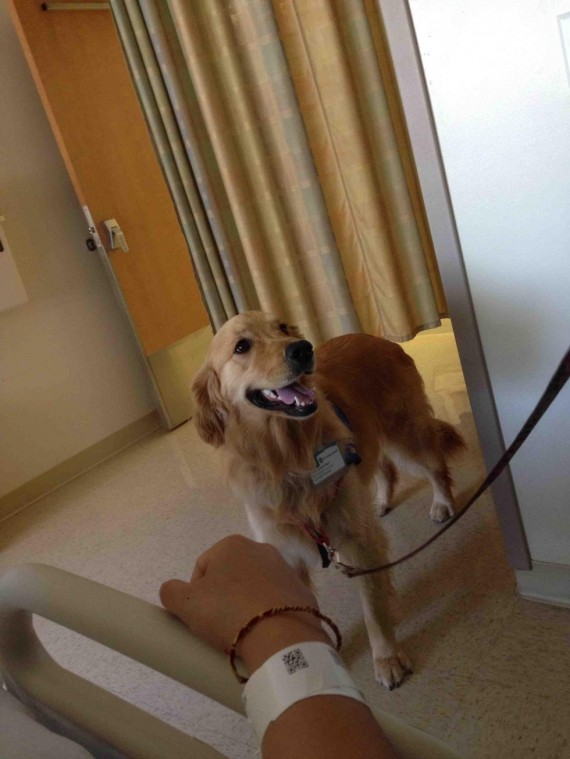 "11) ""Going on day four of bed rest in a hospital. Molly the therapy dog made my stay so much better!"""