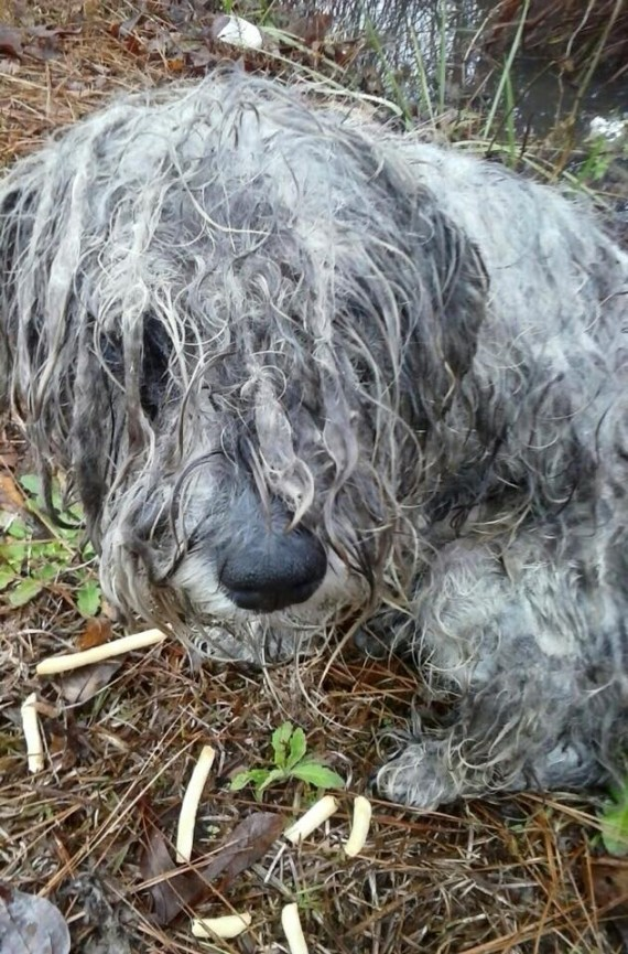 """Kingsley was found tied to a tree on some country land. He had been neglected, beaten, and starved. His hair was matted and painful from not being taken care of."""