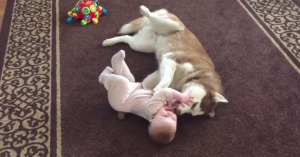 husky and baby