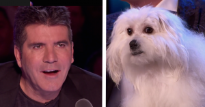 judges dog