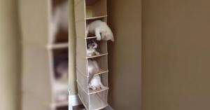 kitten kondos