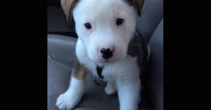 puppy hiccups
