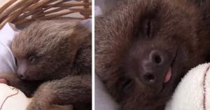 sloth orphanage