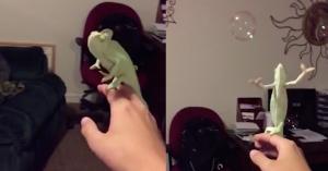 chameleon bubbles