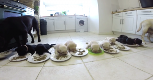 puppy feast