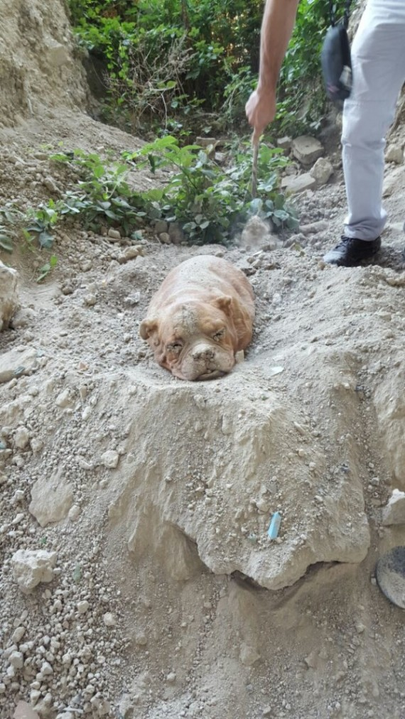 A man was out walking his dog when he noticed something in the dirt.
