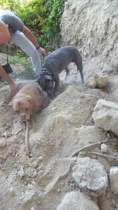 The man and his dog began unburying the poor pup.