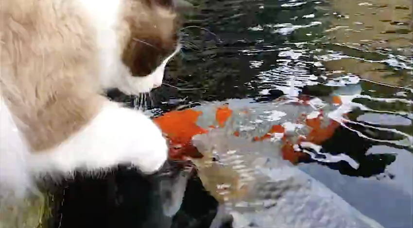 what the cat does when he notices some fish is totally