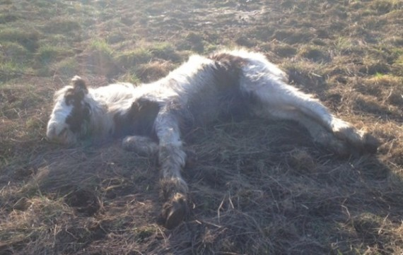 This four-month-old colt was found on the brink of death in a roadside field.