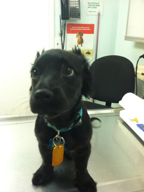 """11) """"Do puppy eyes work here?"""""""