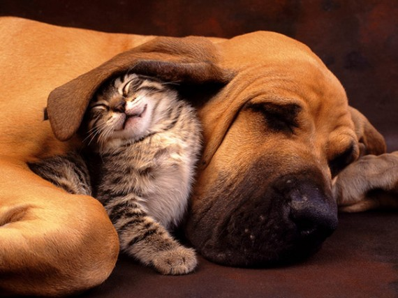 1) Taking shelter under your best friend's ear. :)