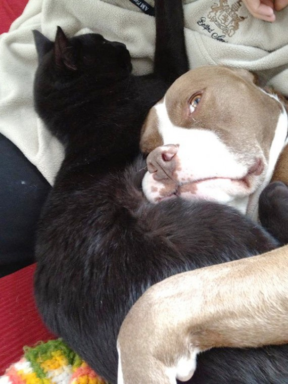 "15) ""My dog has terminal cancer. I've noticed he and my cat have been cuddling a lot more since he got sick."""
