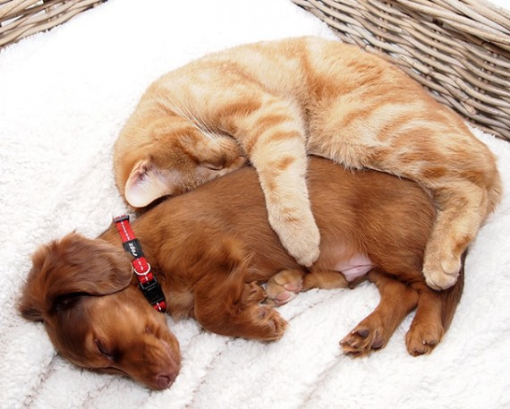 6) Cutest cuddle ever.