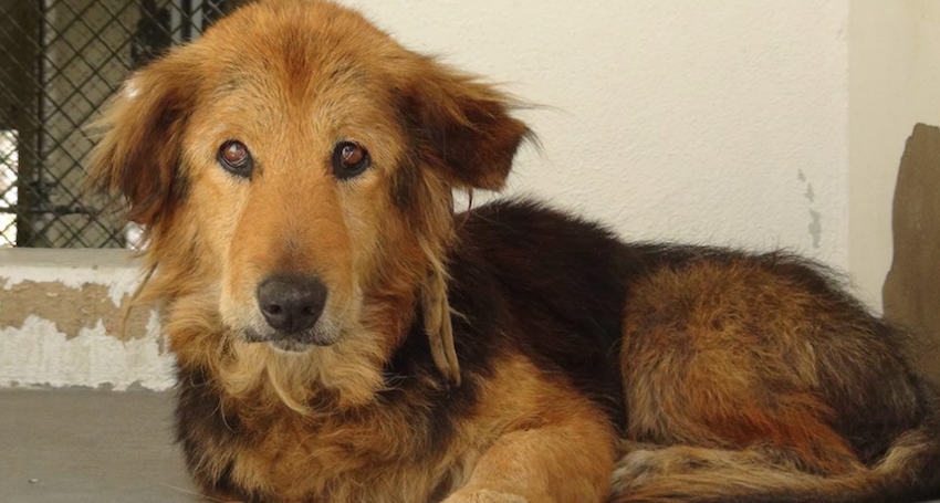 Family became 'too busy' and threw out their dog of 15 years