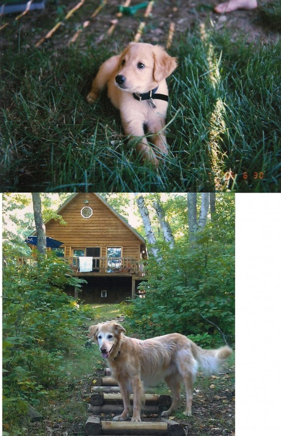 """14) """"Here's the first and the last pictures we ever took of our old dog, 16 years apart."""""""