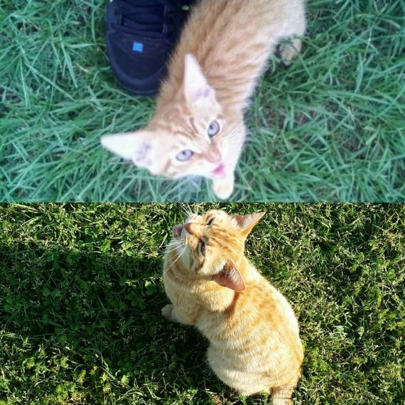 """15) """"We had to put down Simba today. Here's the first picture I took of him and one of the last."""""""