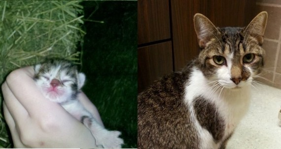 """5) """"The first and last picture of my cat, Steve Holt! I'll miss you so much, buddy."""""""