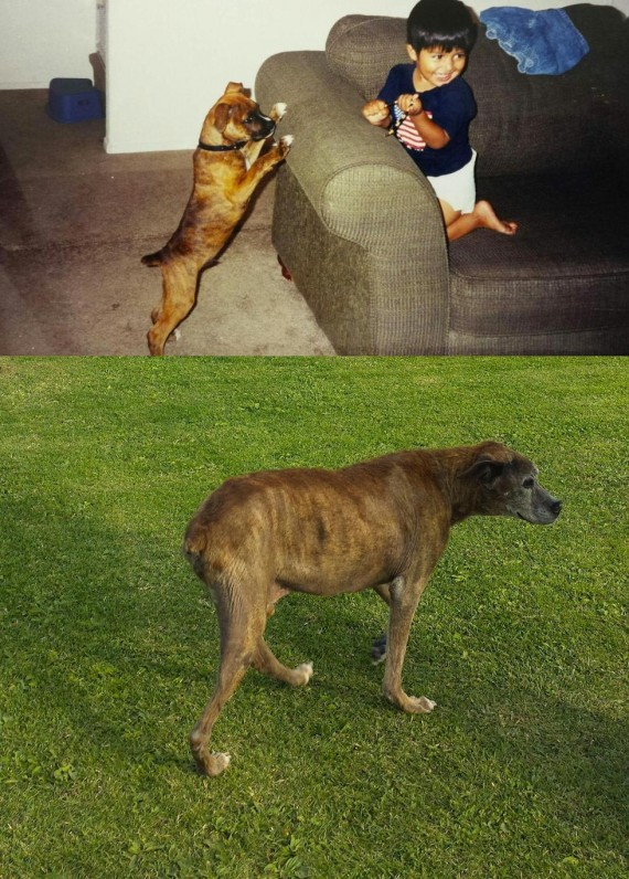 "6) ""My dog on one of his first days and on his last."""
