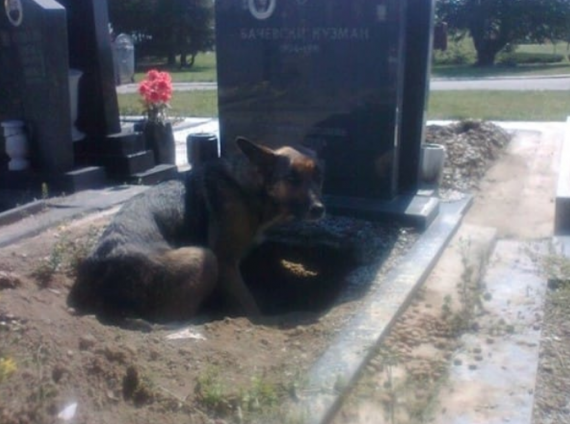 """But, the dog did have a reason.. She was harboring four puppies and decided that underneath this grave would give them the best shot of being warm and safe."""