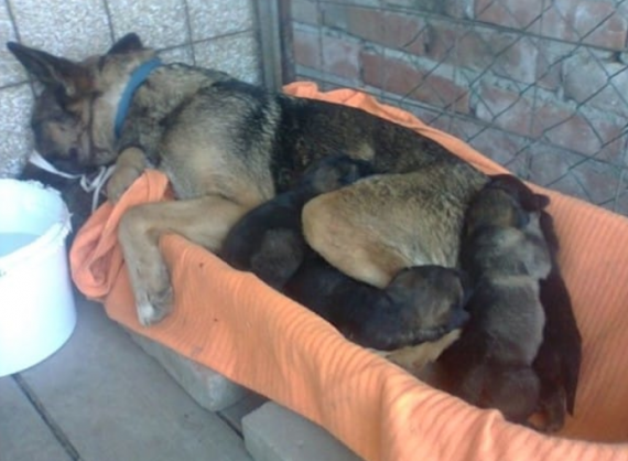 """Luckily, an animal rescuer named Vesna Mihajloski took in the mother and her puppies. The puppies were very frail and were lucky to have been found!"""