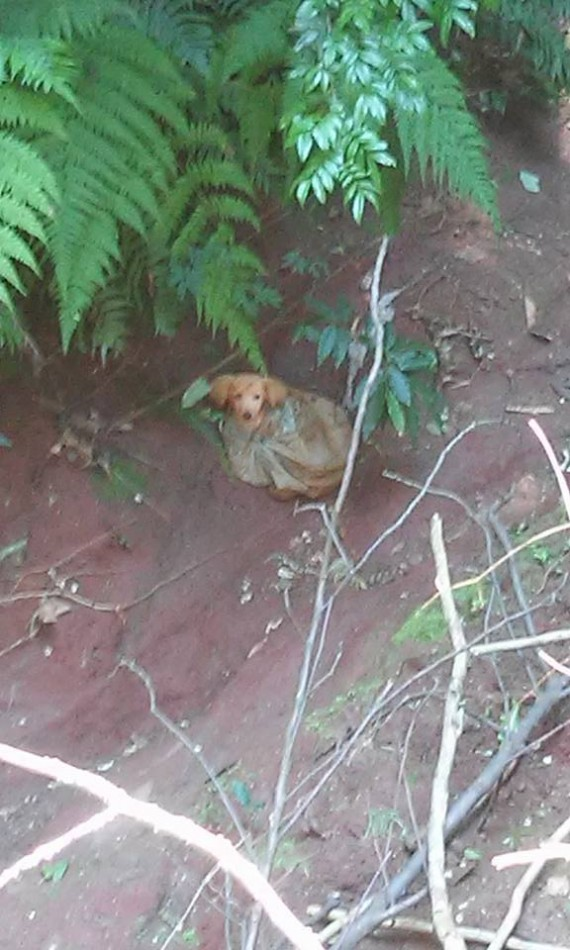 The puppy was found tied up in a plastic bag and thrown in a ravine. It was a difficult place to access and they were afraid it'd be tough to get to him.