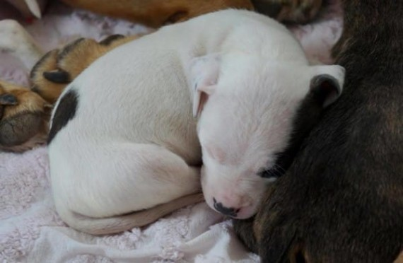 The Circle L. Ranch was able to rescue five of the nine puppies as the others were saved by another organization.