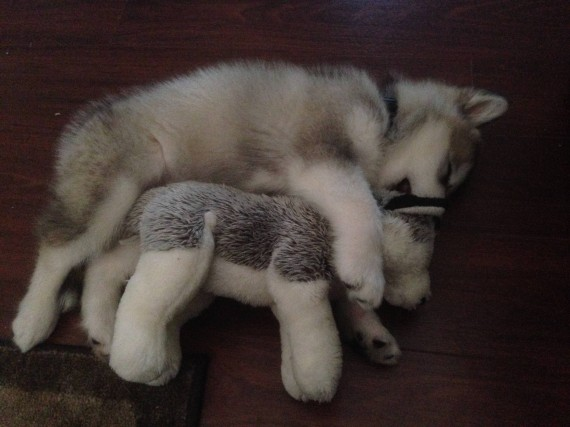 """Then and now. She destroys every stuffed animal except this one. :)"""